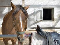 Pferdeseminar
